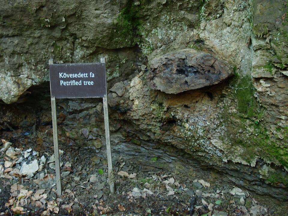 Ipolytarnóc, kövesedett fa