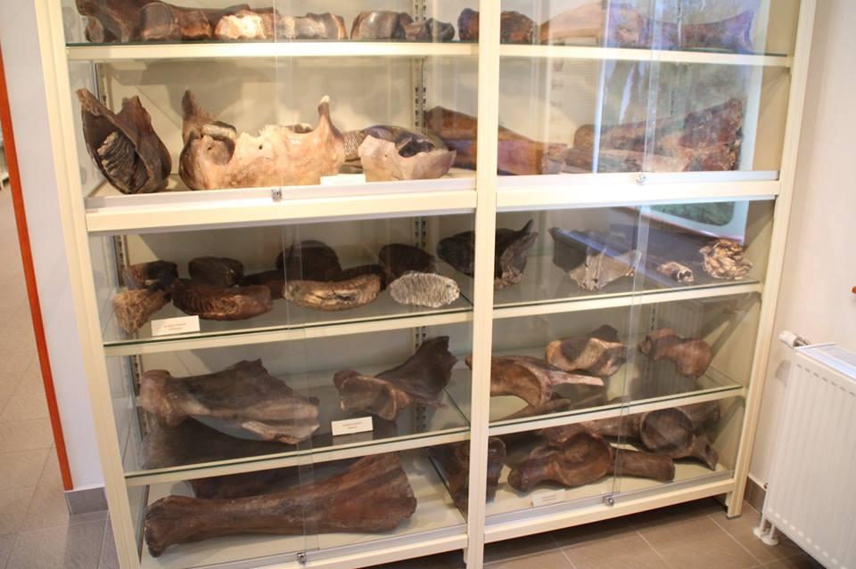 Tiszaföldvár, Tiszazugi Földrajzi Múzeum