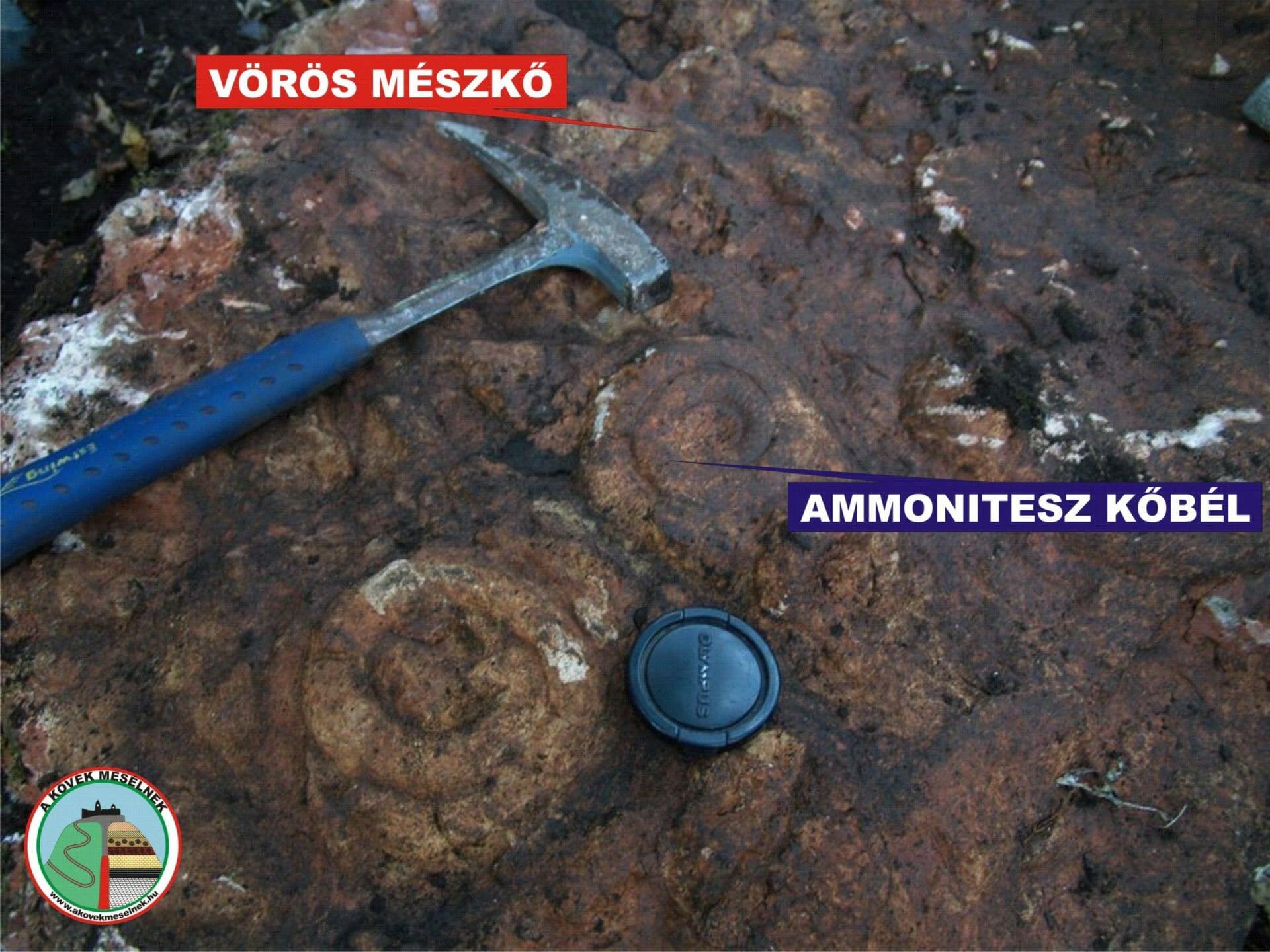 Ammonitesz (litoszféra)