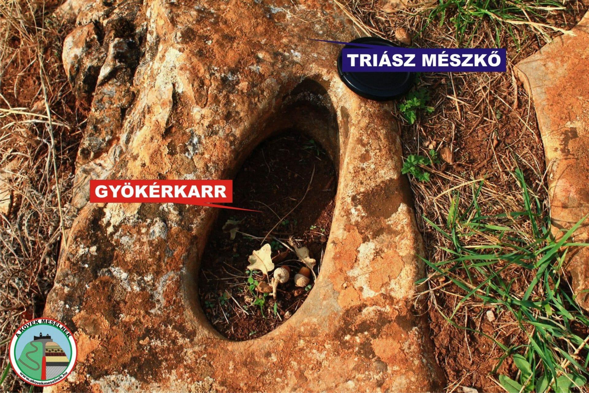 Gyökérkarr (hidroszféra)